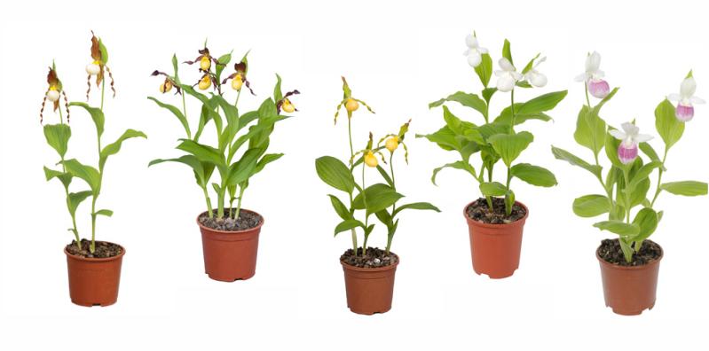 Pflanzenforumde Garten Orchideen